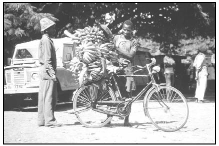 Bananas and plantains are among the staples of the daily diet in Tanzania. Here a vendor loads his bicycle with chane za ndizi (bunches of bananas) to take to the market to sell. Cory Langley